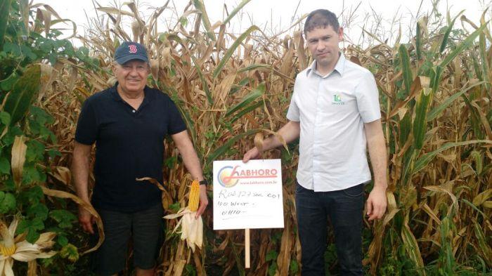 Lavouras de milho na região de Eldorado/OH