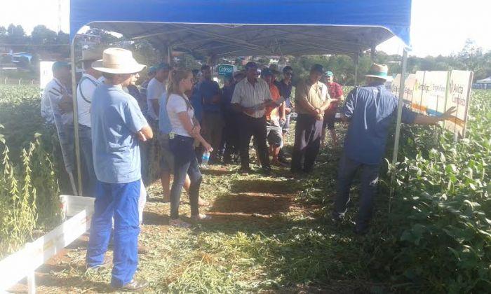 Imagem do dia - Tarde de campo de soja em São José das Missões (RS). Envio de Felipe de Bona