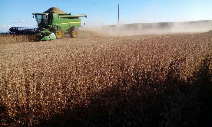 Imagem do Dia - Fim de colheita de soja em Faxinal  (PR), envio de Pavesi