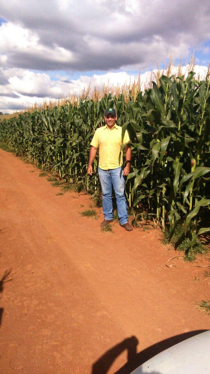 Imagem do Dia - Engenheiro Agrônomo Rodolfo Junqueira Pereira no milho safrinha em Carmo de Minas (MG). Enviado por Vlamir Leggieri