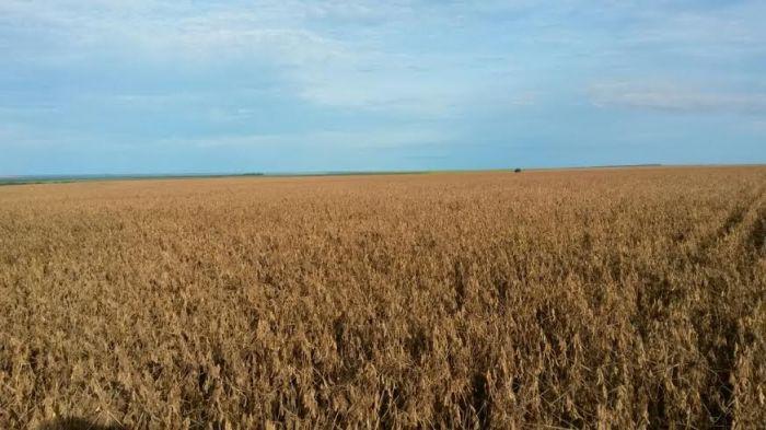 Lavouras de soja na região de Campo Novo do Parecis (MT). Imagem do produtor rural, Jobson Vilela.