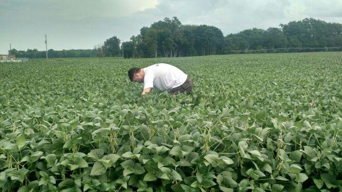 Tour EUA Labhoro - Lavouras de soja em Ligonier, Indiana (EUA)