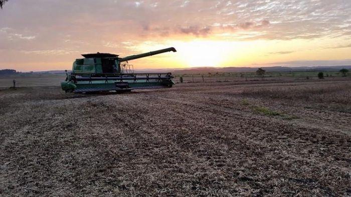 Imagem do dia - Colheita do feijão em Canoinhas (SC). Envio do engenheiro agrônomo, Jefferson Crestani