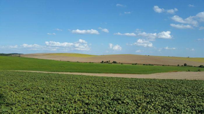 Plantação de Soja em Granja Viero Erebango (RS), da Família Viero. Foto tirada pelo Eng. Adrian Viero.