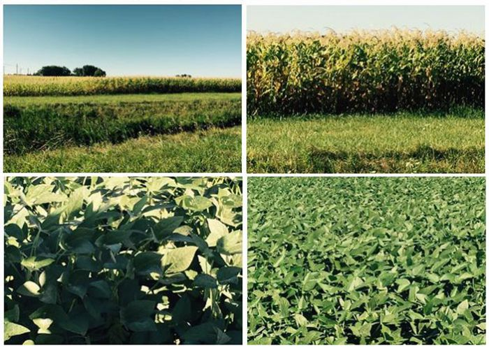 Fotos-Dia-1--Lavouras-em-Ohio---02