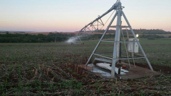 Lavoura de milho em Santa Helena (PR), na Fazenda Americana. Enviado por Leonildo Cenedese