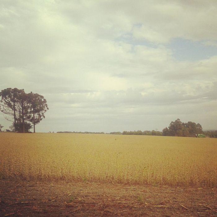 Imagem do Dia - Fim da colheita de soja  em Três de Maio (RS), da família Rossi. Envio de Douglas Rossi