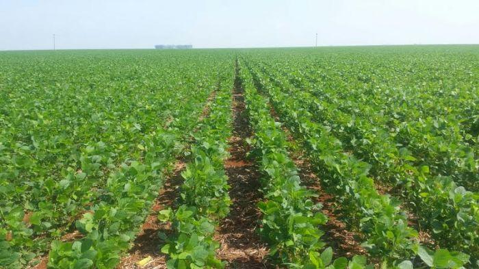 Imagem do dia - Lavoura de soja em Campo Novo do Parecis (MT), do produtor Zanatta