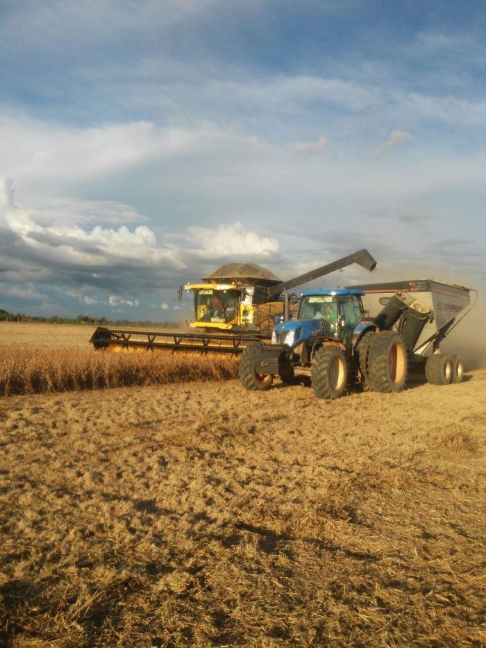 Imagem do dia - Colheita de soja em Ariquemes (RO), do produtor Gilberto Borjio. Foto enviada por Renildo Rolim.