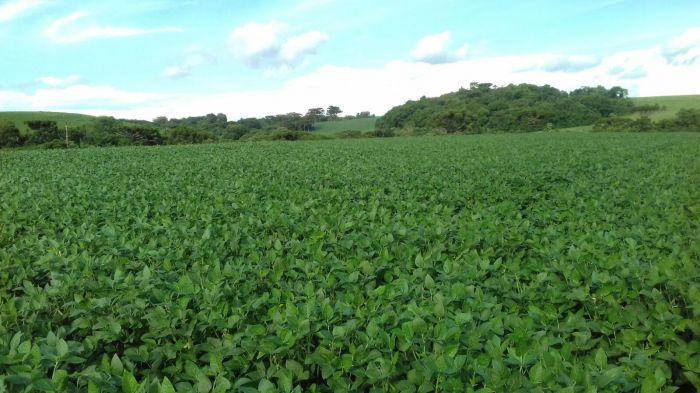 Imagem do dia - Lavoura de soja em Saldanha Marinho (RS), do produtor Jonas Horbach