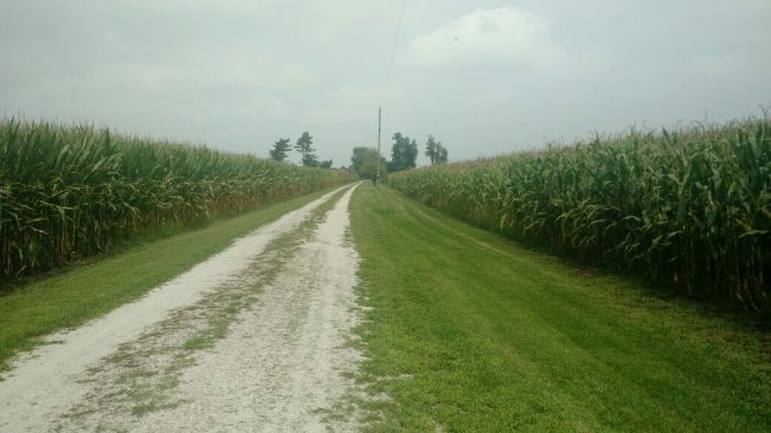 Lavouras de milho em Wanatah, no estado de Indiana (EUA). Envio do diretor do Notícias Agrícolas, Daniel Olivi