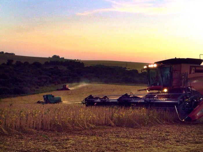 Imagem do Dia - Colheita de soja em Santa Bárbara do Sul (RS), dos produtores Fernando e Rogério Costella