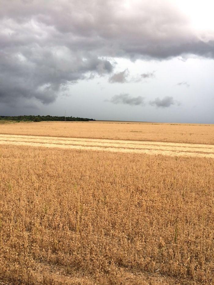 Imagem do dia - Colheita de Soja em Querência (MT), na Fazenda São Cristovão do produtor rural Gilmar Domingos Pascoal 2