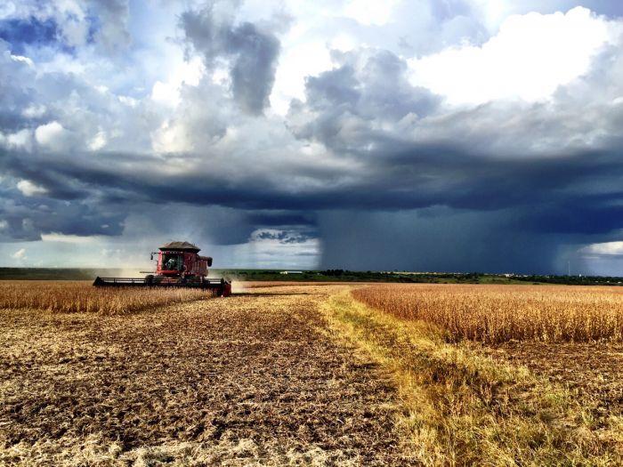 Imagem do Dia - Colheita de soja em Formosa (GO), na fazenda Boa Vista, da produtora Camila Colpo