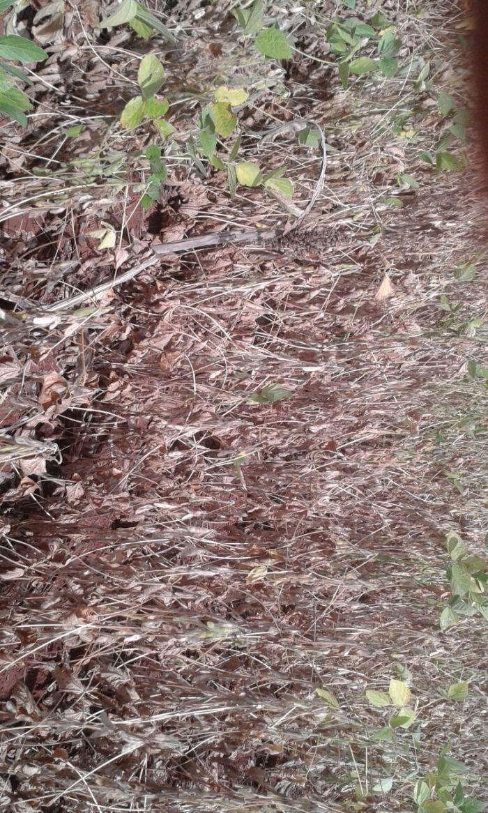 Imagem de lavouras de soja castigadas pelas altas temperaturas e chuvas irregulares em Santa Helena (GO). Foto da produtora, Elizângela Garcia Barbosa dos Santos.
