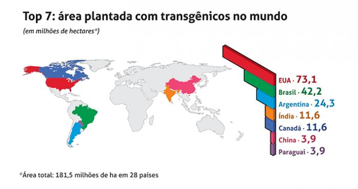 Figura 2 Transgênicos