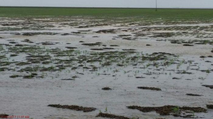 Lavouras de milho submersas em Campo Novo do Parecis/MT