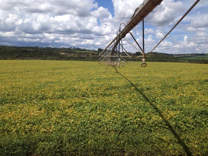 Lavouras de soja na região de São Miguel Arcanjo (SP). Foto do produtor rural, João Xavier.