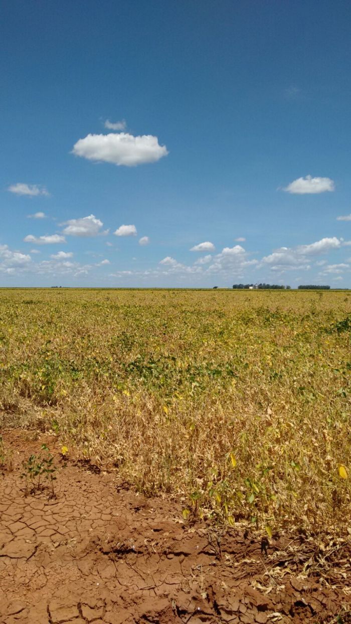 Lavouras de soja morrem sob sol escaldante no Matopiba