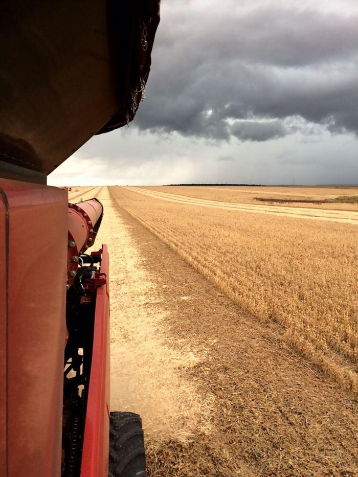 Imagem do dia - Colheita de Soja em Querência (MT), na Fazenda São Cristovão do produtor rural Gilmar Domingos Pascoal.
