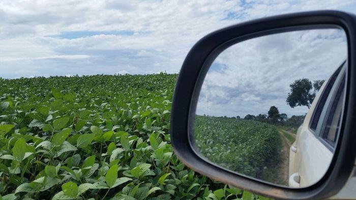 Imagem do dia - Lavoura de Soja em Sítio dAbadia (GO). Foto enviada pelo produtor rural Júlio Tobio.