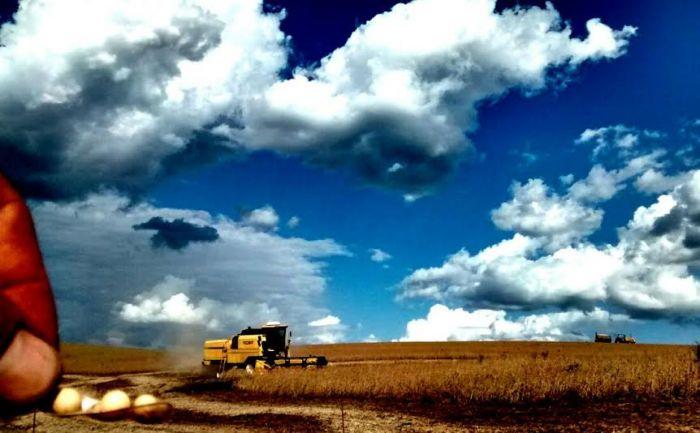 Imagem do dia - Colheita da soja em Getúlio Vargas (RS), do produtor rural Roges Muzzo