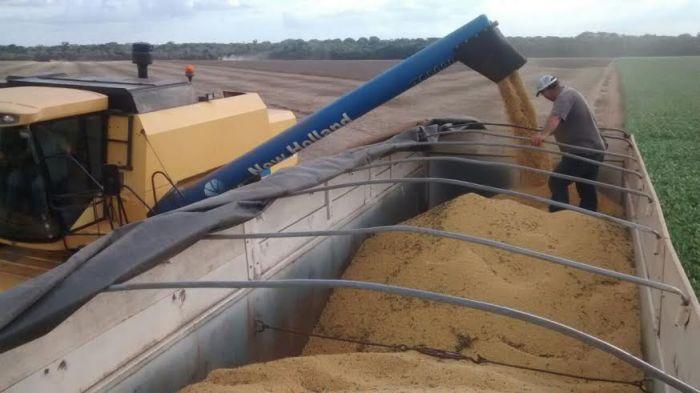 Imagem do dia - Colheita da soja na região de Diamantino (PR). Imagem do produtor rural, Altemar Kroling