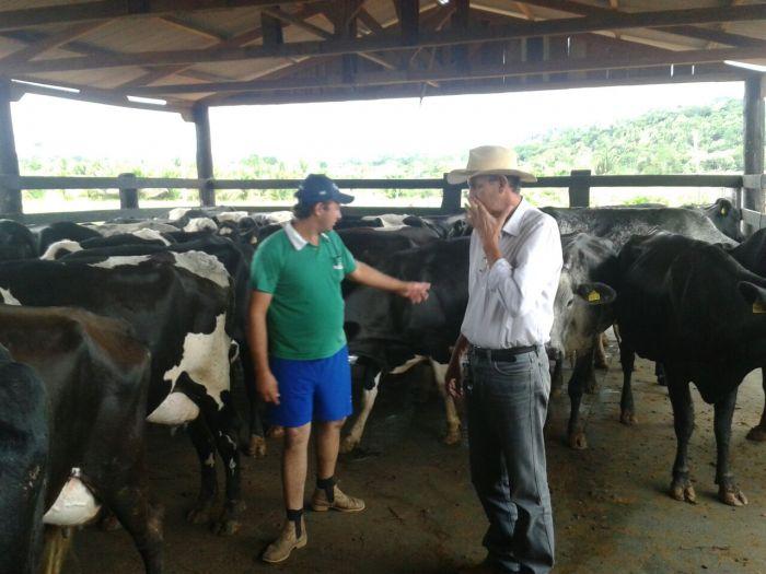 Imagem do dia - Ordenha da tarde na Fazenda 7 Estrela em Ouro Preto (RO). Foto enviada pelo produtor Mauricio Rafael2
