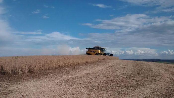 Imagem do dia - Colheita de Soja em Campos Novos (SC), na Fazenda Novo São Pedro, do produtor Jeferson da Rocha.