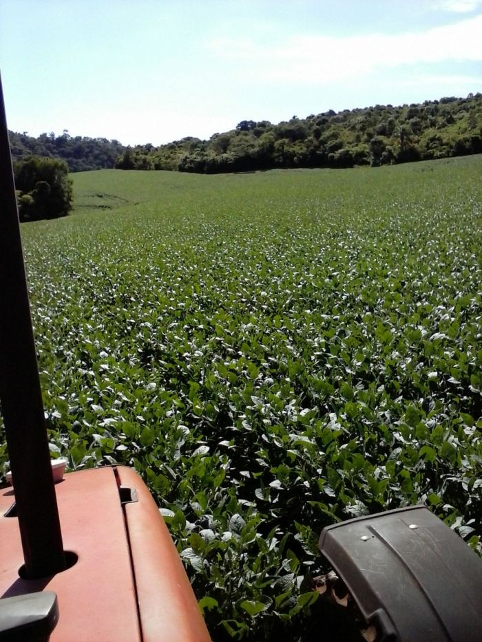 Imagem do Dia - Lavoura de soja em Rio Bonito do Iguaçu (PR), de  Edu Birgeier