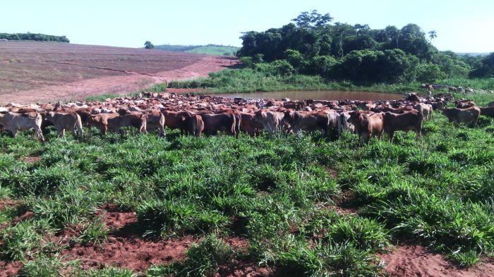 Imagem do Dia - Estância lãs Marias no Departamento Amanbay, no Chaco Paraguaio. Envio de National Ganados S.A.