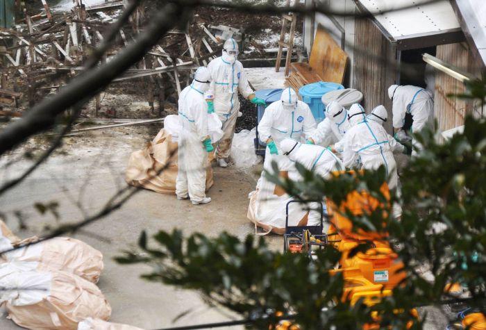 Gripe Aviária -  Reuters
