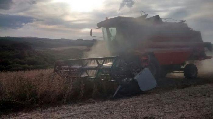 Imagem do dia - Colheita da soja em Lagoa Vermelha (RS). Envio do produtor José Otávio