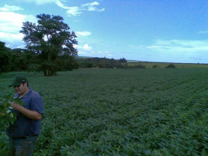 Imagem do dia - Lavoura de soja na região de Ipaussu (SP). Imagem enviada pelos produtores rurais, Rômulo Gazola, Silvestre Gazola e André Gazola