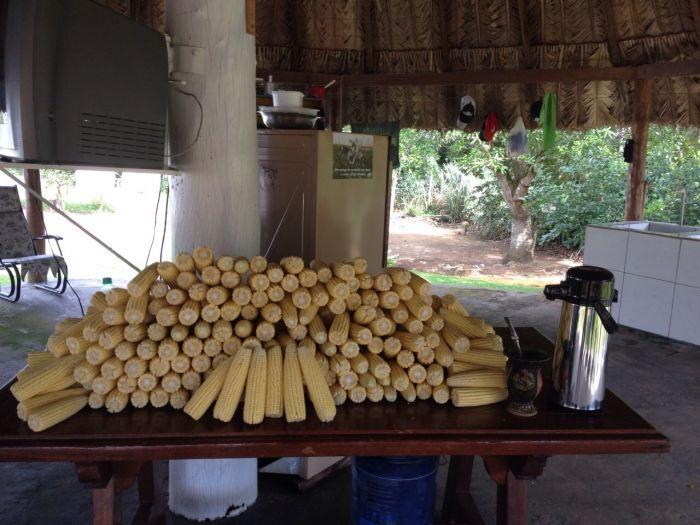 Imagem do Dia - Pamonha de milho safrinha dos irmãos Rossetti em Rio Verde (GO)