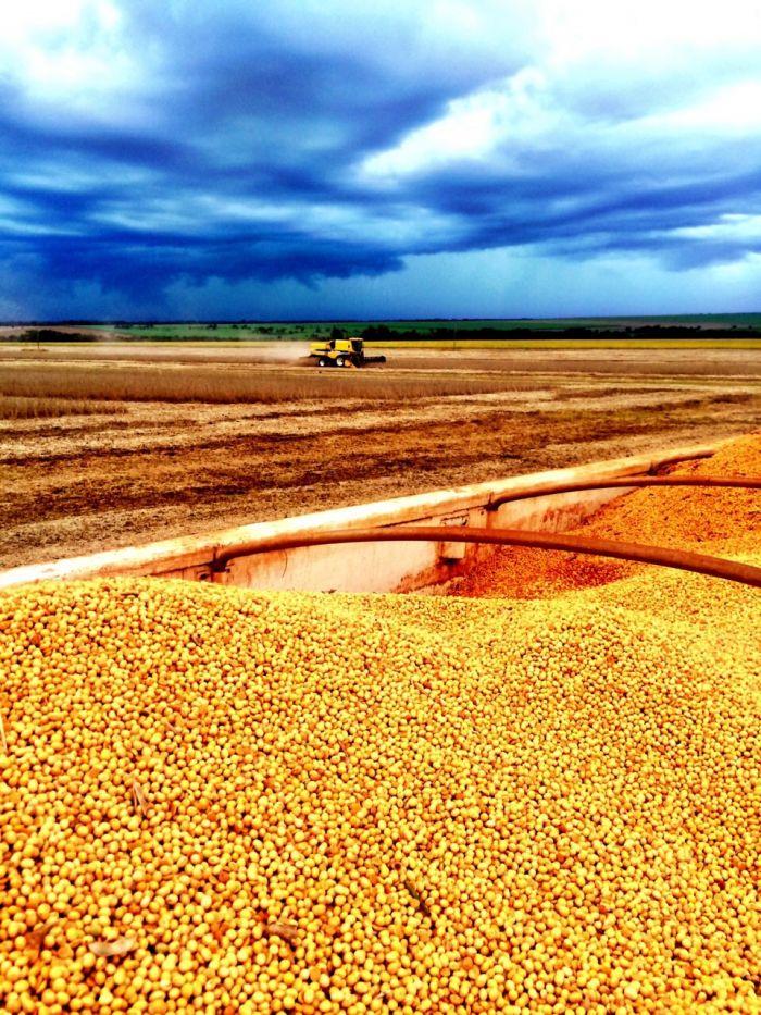 Imagem do dia - Colheita de Soja em Bom Jesus de Goiás (GO), na Fazenda Santo Antônio do produtor rural Messias Rogério Issy.