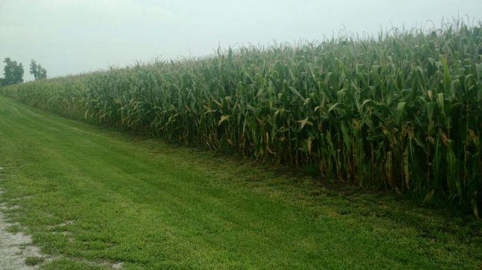 Tour EUA Labhoro - Lavouras de milho na cidade de Wanatah, em Indiana.