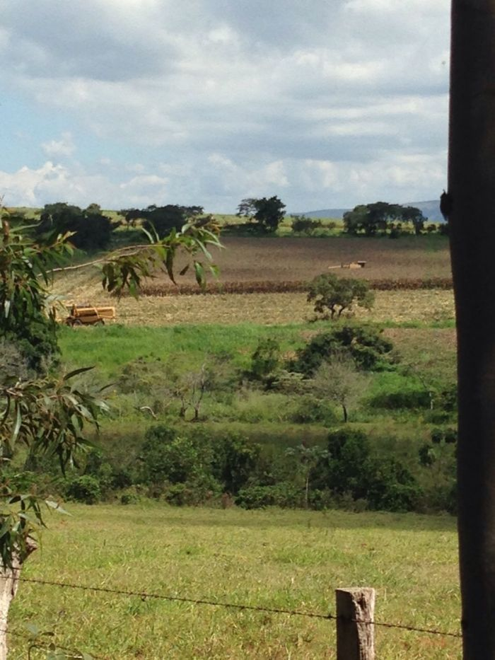 Imagem do Dia - Colheita de milho em Pimenta (MG), do produtor Otávio Macedo
