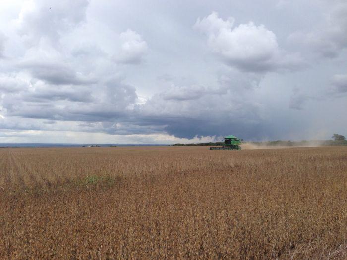 Imagem do dia - Colheita de soja em Ipameri (GO), do produtor Roberto Guerra.