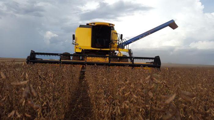 Imagem do dia - Finalizando a colheita da soja em San Alberto ( Gleba 8 ) Paraguai. Propriedade de Robson Affonso