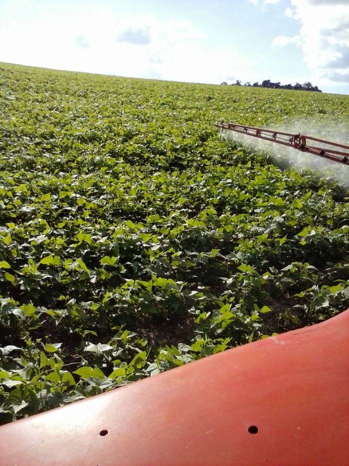 Imagem do Dia - Aplicação de fungicida em lavoura de Feijão em Rio Bonito do Iguaçu (PR), do produtor Edu Birgeier