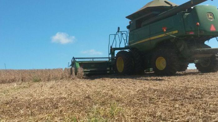 Imagem do dia - Lavoura de soja em Mangueirinha (PR), do produtor rural Alcides Zanardi.