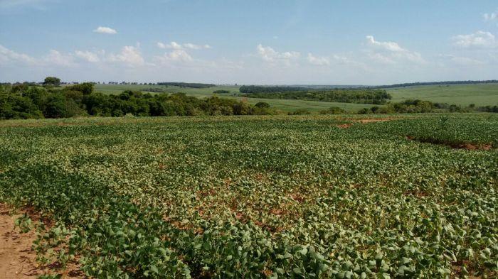 Lavoura de soja em Caarapó (MS). Enviado por Renato Ferreira