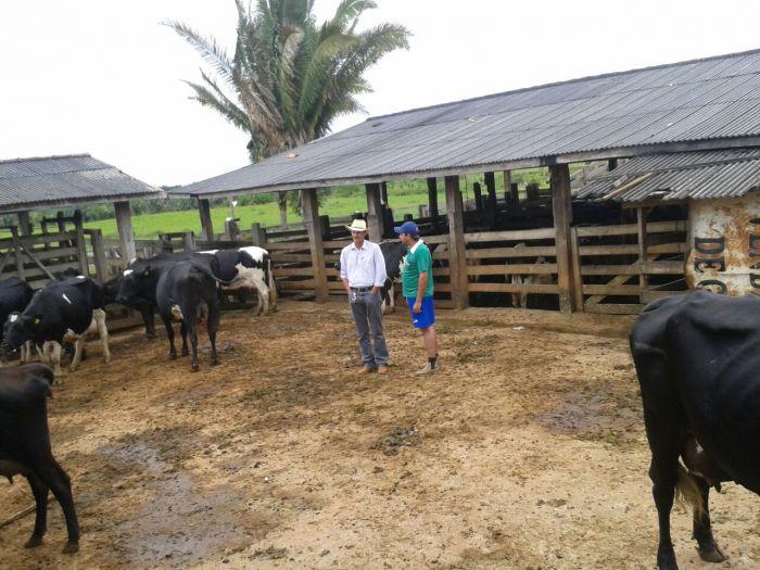 Imagem do dia - Ordenha da tarde na Fazenda 7 Estrela em Ouro Preto (RO). Foto enviada pelo produtor Mauricio Rafael.