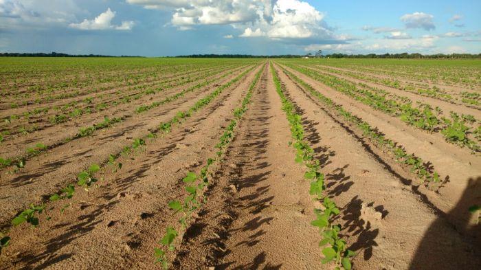 Imagens do dia - Plantio da soja em Roraima, na fazenda Werner