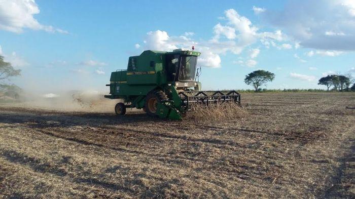 Imagem do dia - Lavoura de soja em Tupanciretã (RS), na Granja Ouro Verde, da família Schaefer Uebel