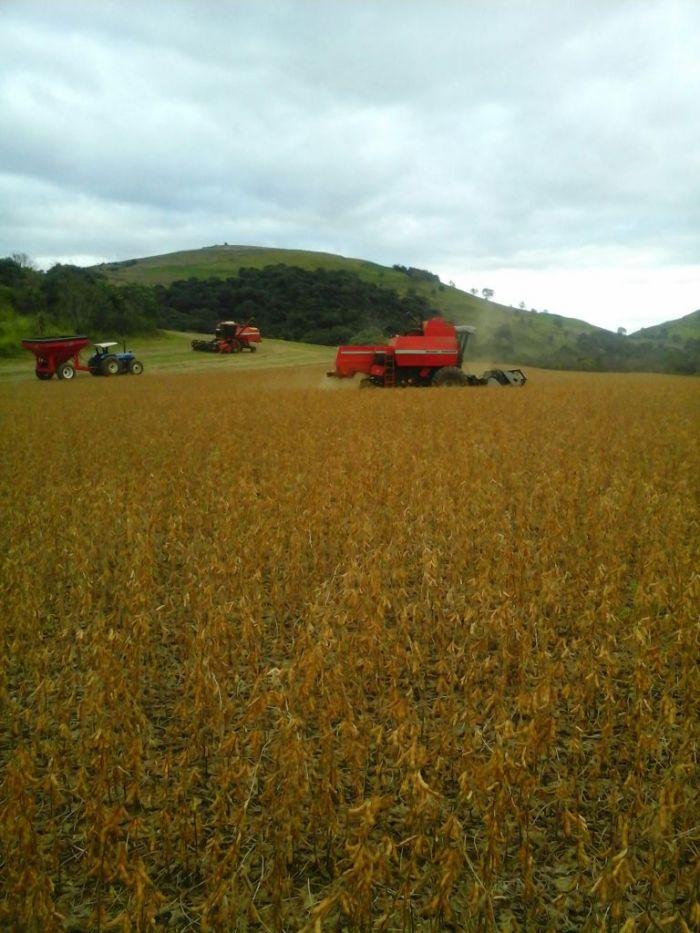 Imagem do Dia - Colheita de soja safrinha em Clevelândia (PR), dos irmãos Guerra