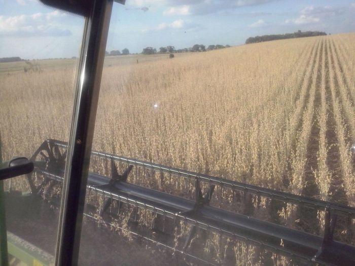 Colheita de soja em São Sepé (RS), na granja Baixo Grande. Imagens de Paulo Bolzan