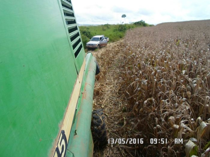 Imagens do dia - Colheita de milho na propriedade do Erisvaldo, em Dom Eliseu (PA)