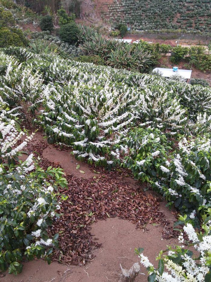 Florada da região de Manhuaçu (MG), na região da Zona da Mata de Minas. Enviado por Romário Lucas